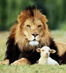 lion and the lamb 2