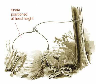 A Snare for the Unwary