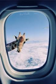 impossible giraffe